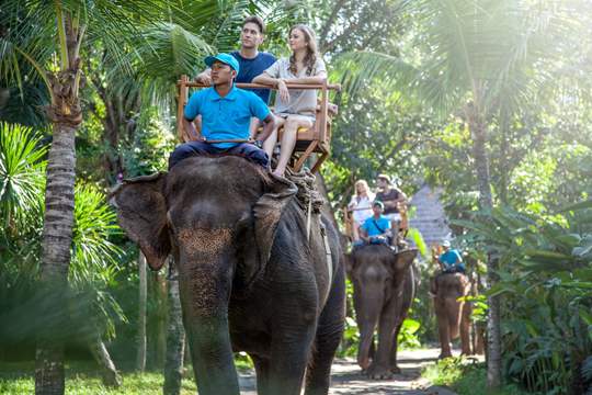 elephant-safari-3
